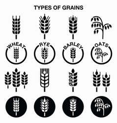 Types of grains cereals icons - wheat rye vector image