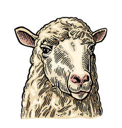 Sheep head hand drawn in a graphic style vintage vector