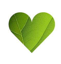 Green leaf veins texture heart shaped earth day vector