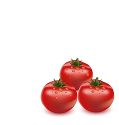 Tomato on white background vector