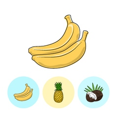 Fruit icons banana pineapple coconut vector