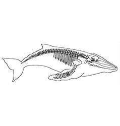 Whale skeleton vector