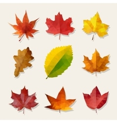Set of Nine Low Poly Autumn Leaves vector image