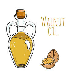 Colorful hand drawn walnut oil bottle vector