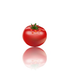 Tomato on white background3 01 vector