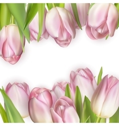 Colorful tulip blooms card eps 10 vector