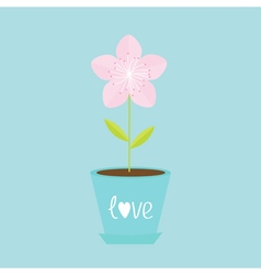 Sakura flower pot japan blooming cherry blossom vector