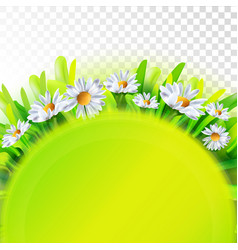 Green nature background with chamomile vector