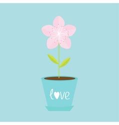 Sakura flower pot Japan blooming cherry blossom vector image vector image