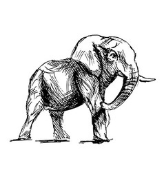 Hand sketch of an elephant vector