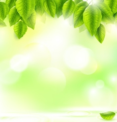 Green leaves with abstract natural background vector
