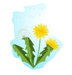 Dandelions with leaves vector