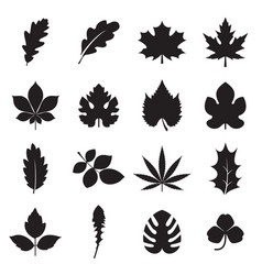 leaf icons isolated on a white background vector image vector image