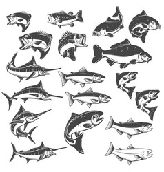 fish on white background carp bass fish trout vector image
