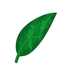 green banana leaf vector image vector image