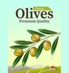Label of green olives Realistic Olive branch vector image