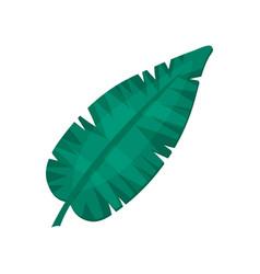 banana leaf tropical palm leaf vector image vector image