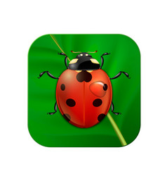 Close-up realistic icon with ladybug on vector