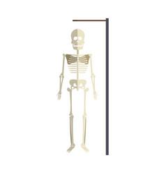 Medical skeleton icon vector
