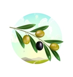 Realistic olive branch vector