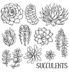 Hand drawn succulent plants set vector