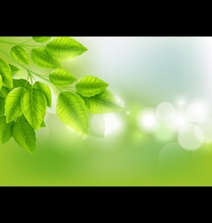 Fresh green leaves with Sunny background vector image