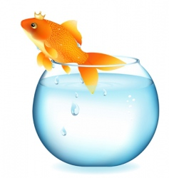 goldfish in aquarium vector image vector image