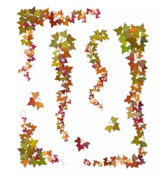 Hanging branches of autumn ivy vector image vector image