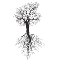 Mulberry tree without leaves with root vector image vector image