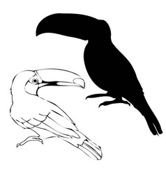 stylish abstract silhouette toucan icon vector image
