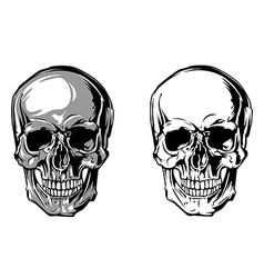 skull anatomy front vector image