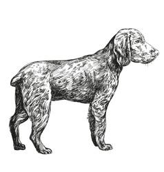 Dog hunting hand drawn llustration vector