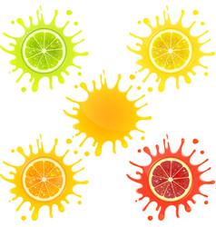 Citrus Fruit in Splashes of Juice vector image vector image