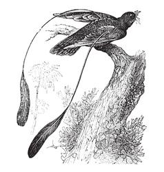 Nightjar vintage engraving vector image vector image