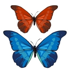 Red and blue beautiful butterfly insect vector image vector image