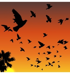 Sunset birds silhouettes vector