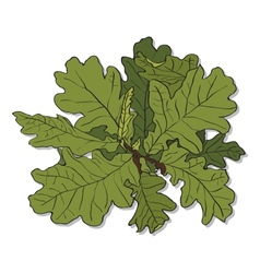 branch of an oak vector image vector image