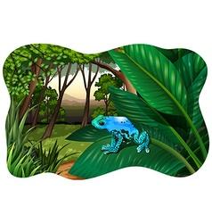 Blue frog vector image