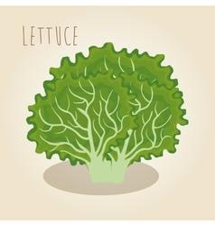 fresh lettuce vegetarian food vector image