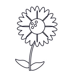 gerbera flower natural outline vector image
