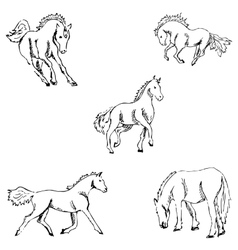 Horses a sketch by hand pencil drawing vector