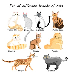 Set of cat breeds vector