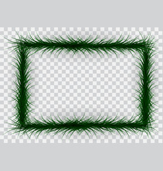 frame of colorful coniferous branches on vector image