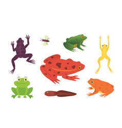 printexotic amphibian set frogs in different vector image vector image