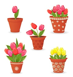 Collection of tulip planted in ceramic pots for vector