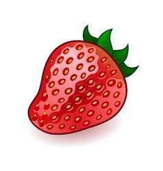 Isolated fresh shiny strawberry on white vector image