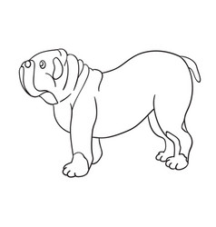 cute cartoon contour bulldog isolated on white vector image vector image