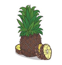 Isolate ripe ananas fruit vector