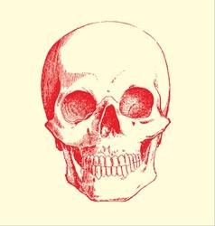skull sketch vector image