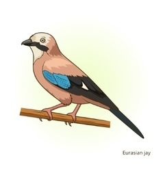 Eurasian jay bird educational game vector